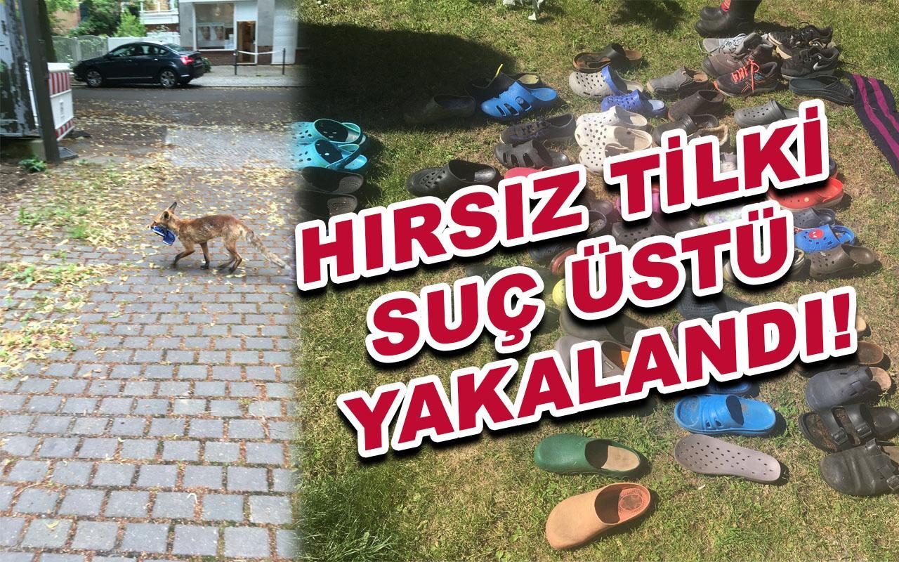 Almanya'da ayakkabı ve terlik çalan Tilki suçüstü yakalandı