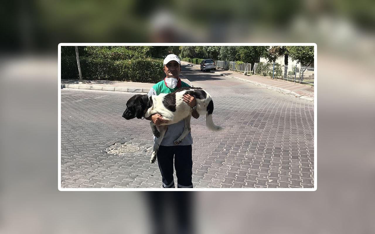 Üç bacaklı sokak köpeği ile 5 yıldır arkadaşlık yapıyor