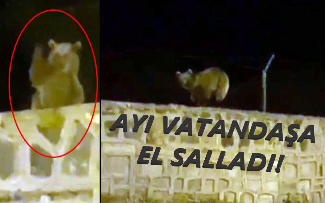 Kars Sarıkamış'ta bir ayı vatandaşa el salladı