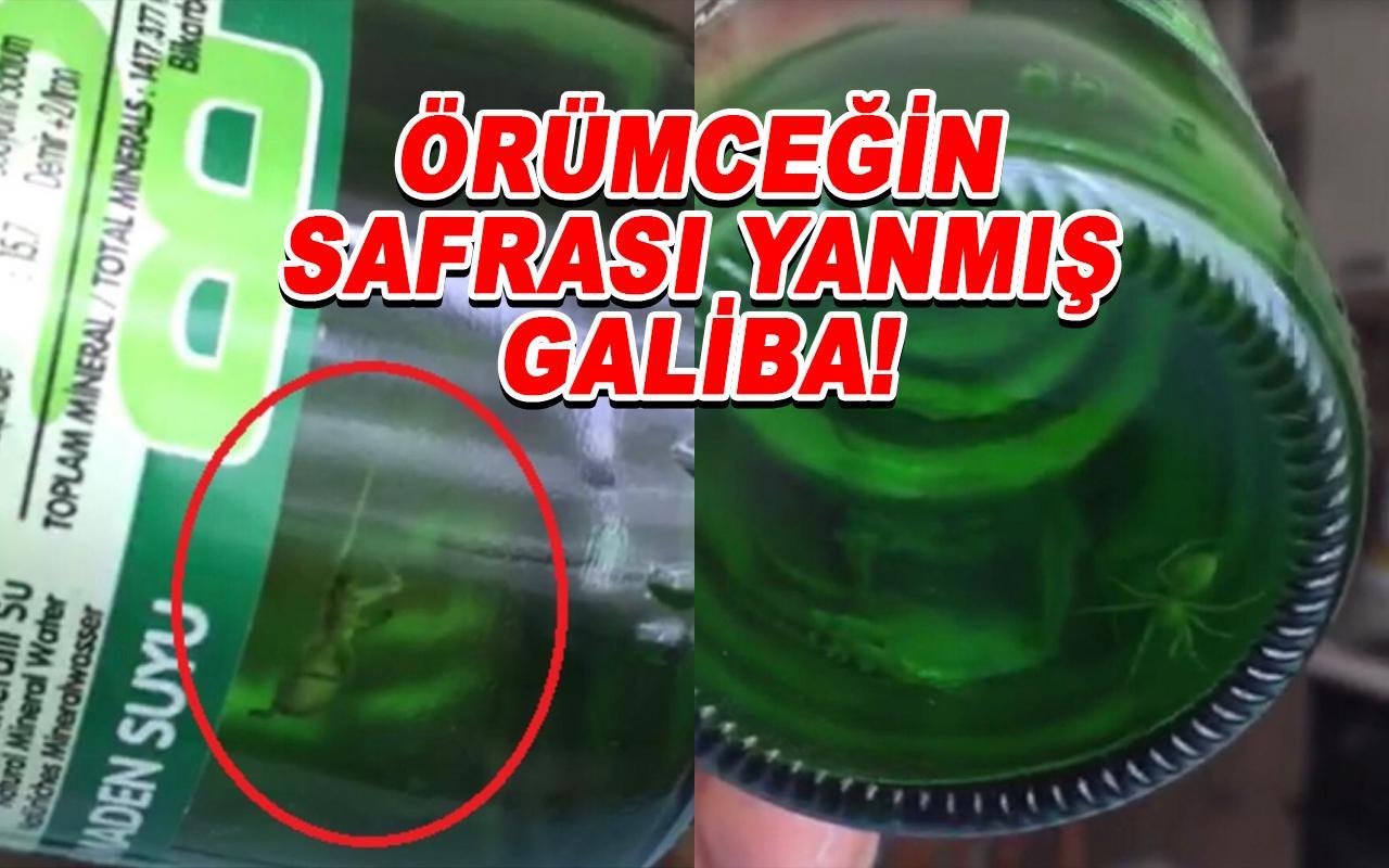 İstanbul'da vatandaşı maden suyu şişesinden örümcek çıktı