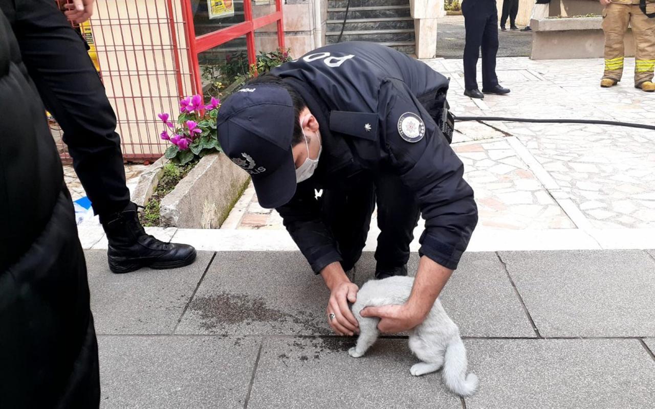 Kadıköy'de kedi elektrikli sobayı devirdi ev küle döndü